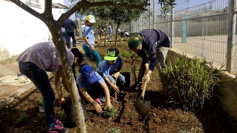 ג'דיידה מאכר - בניית גינה בבית ספר