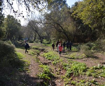 ילדים מטיילים ביער טבעון
