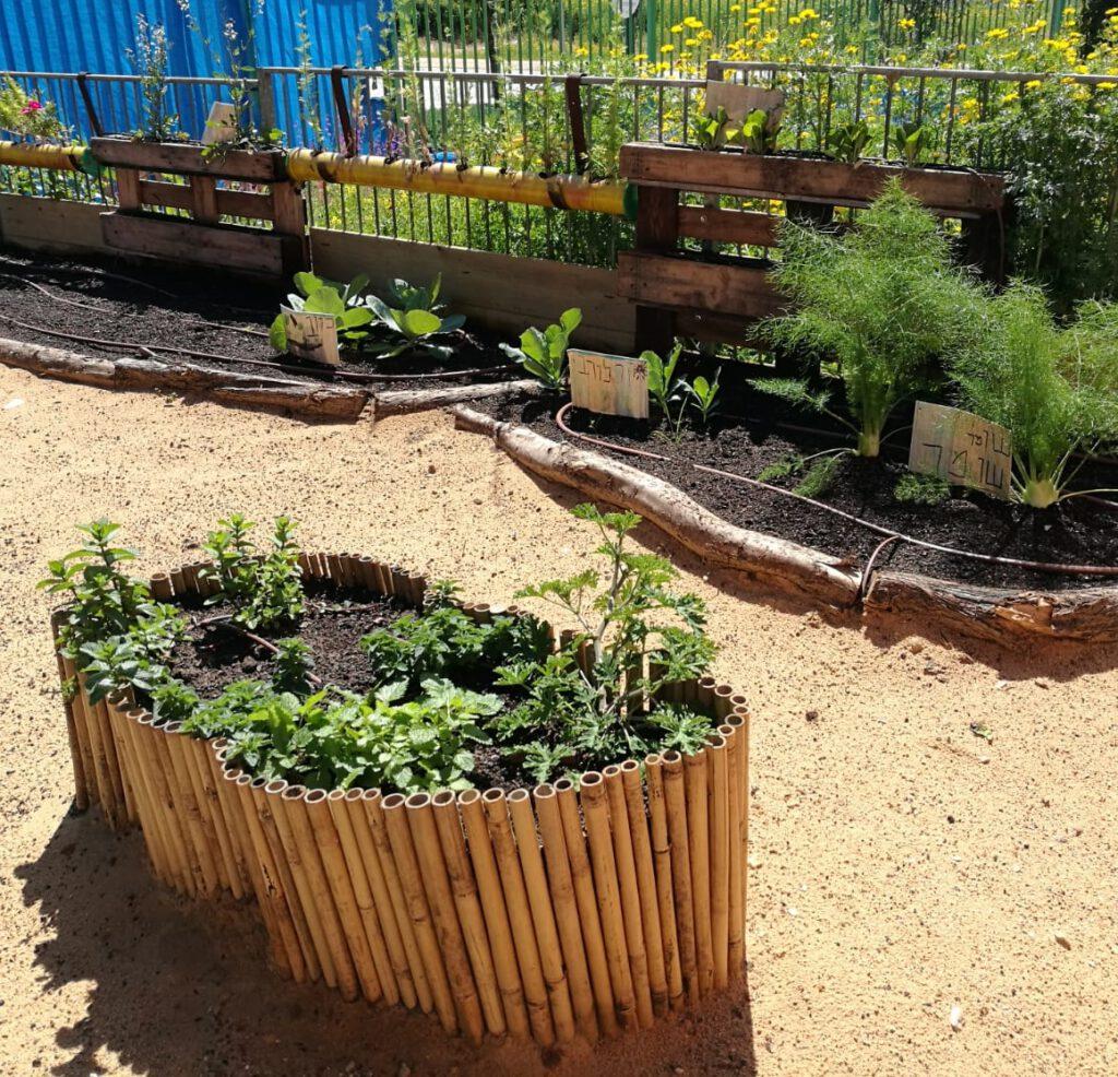 חצר ירוקה בגן הילדים פז
