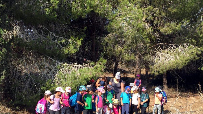 איך להפוך לבית ספר יער