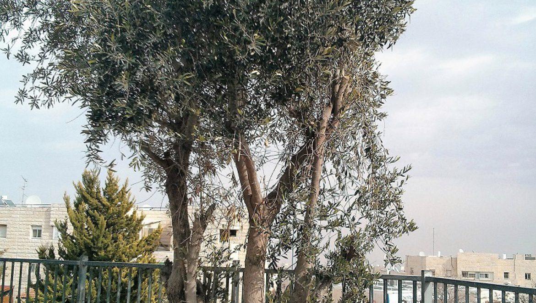 עץ אחד שהוא עולם ומלואו