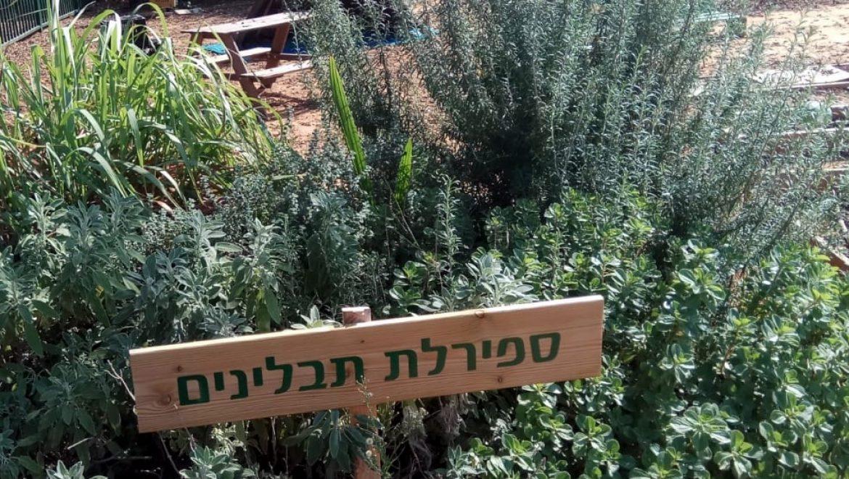 צמחי מרפא ושימושיהם בגן הילדים
